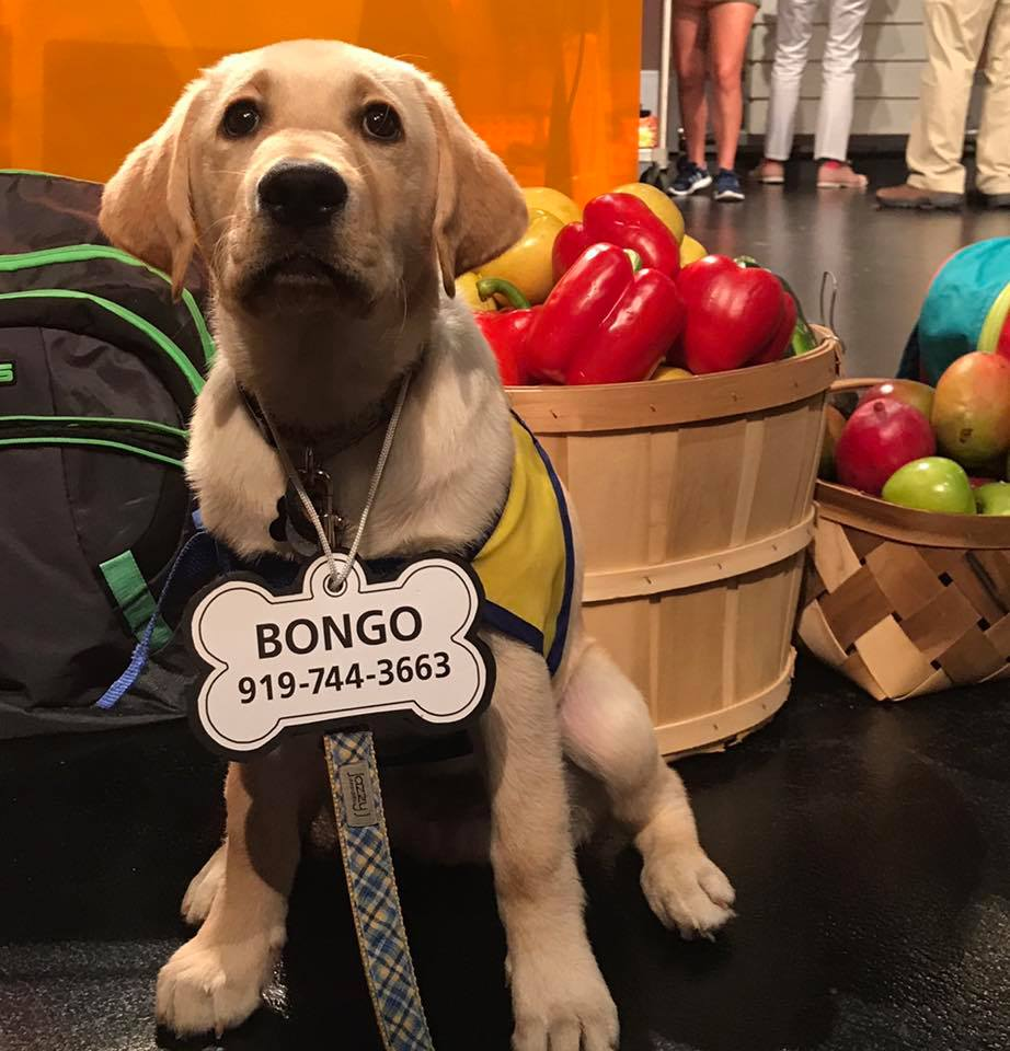 Bongo1.jpg