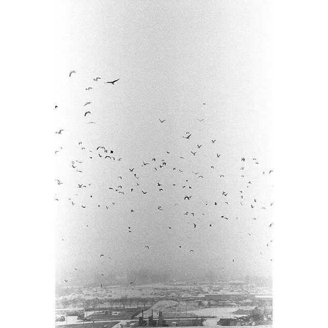 #birds#seagulls#flying#high#over#zagreb#croatia#bw#analog#film#photography