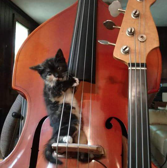 Cat on bass.png