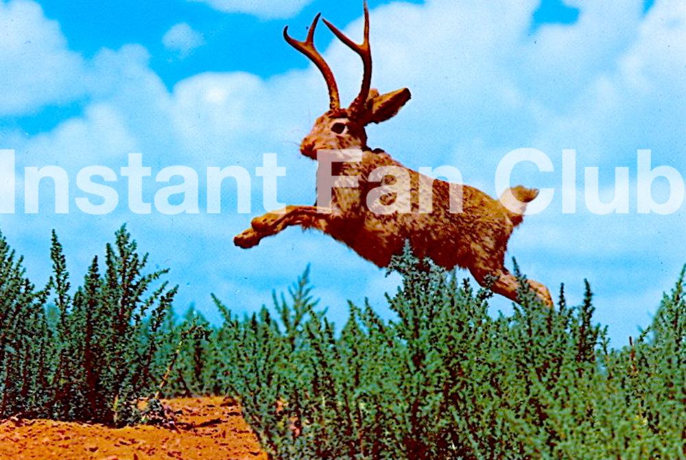 IFC postcard.jpg