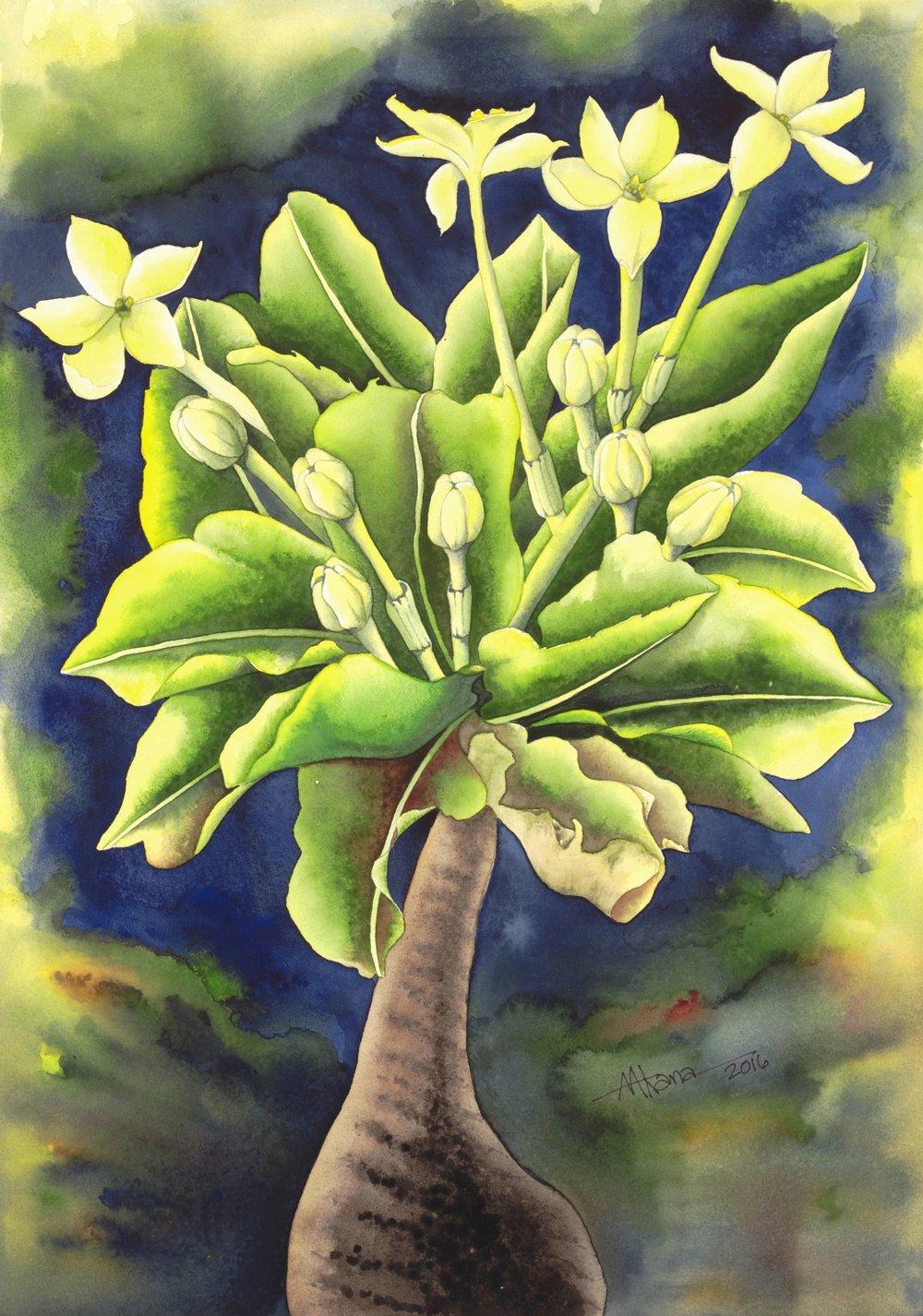 Alula Flower