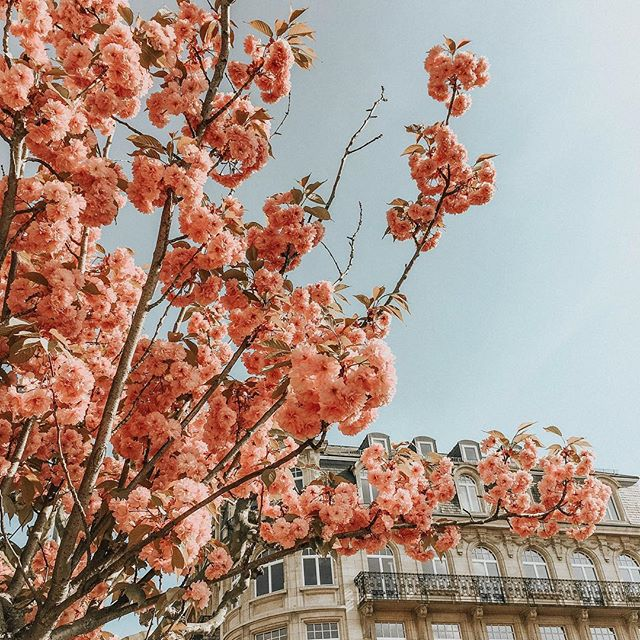 Spring has finally decided to grace us with its presence 🌸🌸🌸• • •  #mytinyatlas #passionpassport #iamatraveler #visitluxembourg #sheisnotlost #travelstoke #welivetoexplore #instatravel #travelgram #passportready #travelblogger #wanderlust #adventure #explore #ilovetravel  #vsco #vscocam #wander #followmeto #wanderer #getlost #travelblog #theglobalwanderer #letsgosomewhere #wearetravelgirls #globalwanderer #luxembourg #theprettycities #zoelazpresets