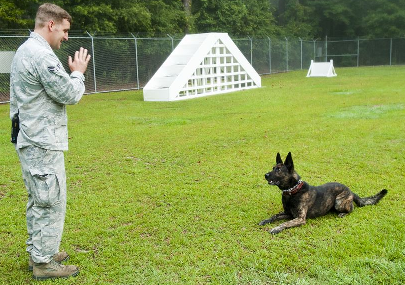 4th SFS Military Working Dogs Demo