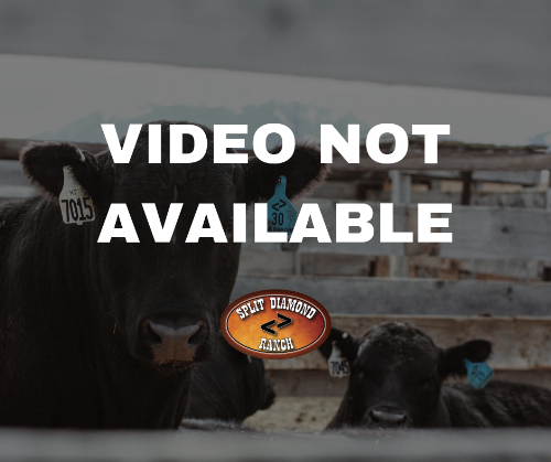 VIDEO NOT AVAILABLE SD FEMALE SALE.png