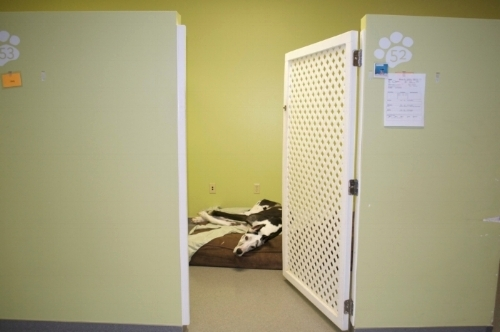 Large dog overnight suite in the luxury wing at our Capitol location