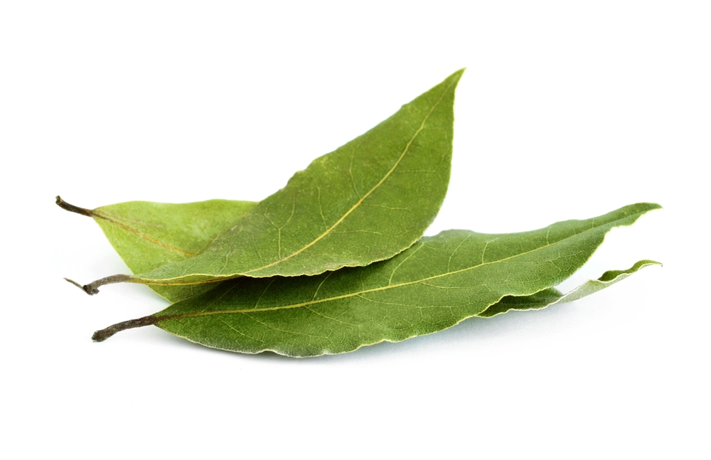 Bay Leaf detoxifies the body, slows the aging process, speeds wound healing, protects the body from bacterial infections, manages diabetes, improves heart health, reduces inflammation, alleviates respiratory issues, and optimizes digestion. Find it in our Chai Blend.