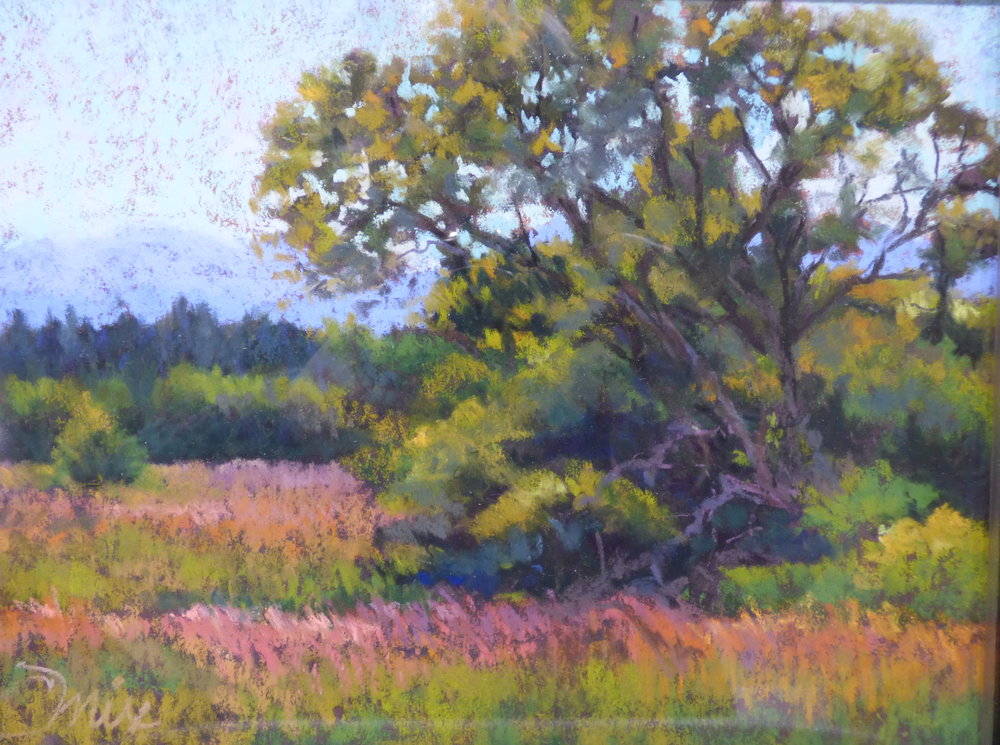 Cops of Willows - pastel plein air