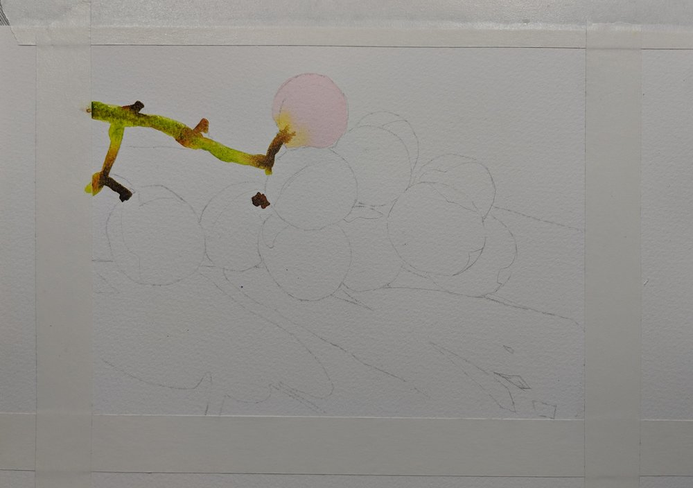 Begin painting the elements such as stems and grapes. We will paint the background and shadows last.