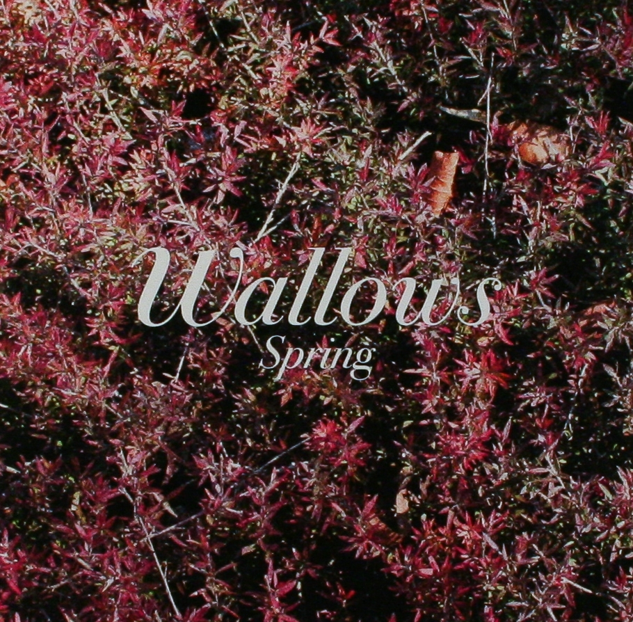Wallows: New EP 'Spring'