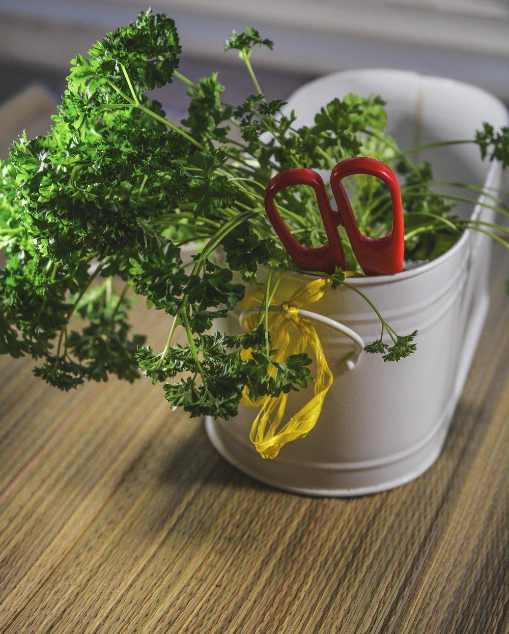 herbs-1007053_1920.jpg