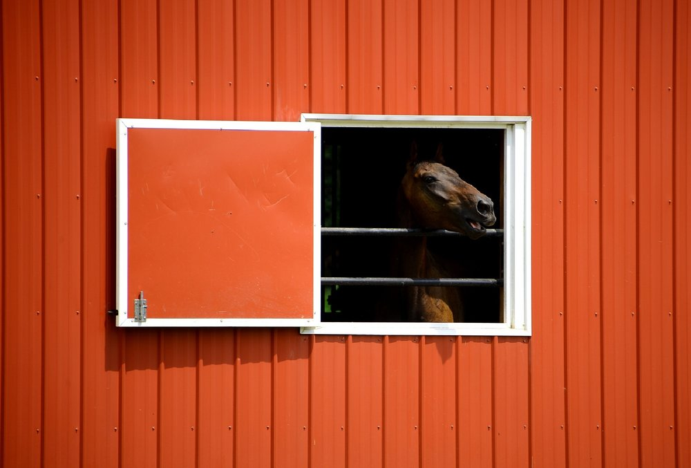 SEO for horse business