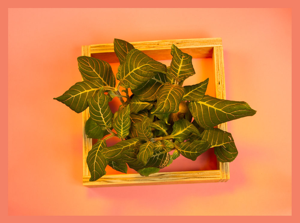 Plantboxpink.Web.jpg