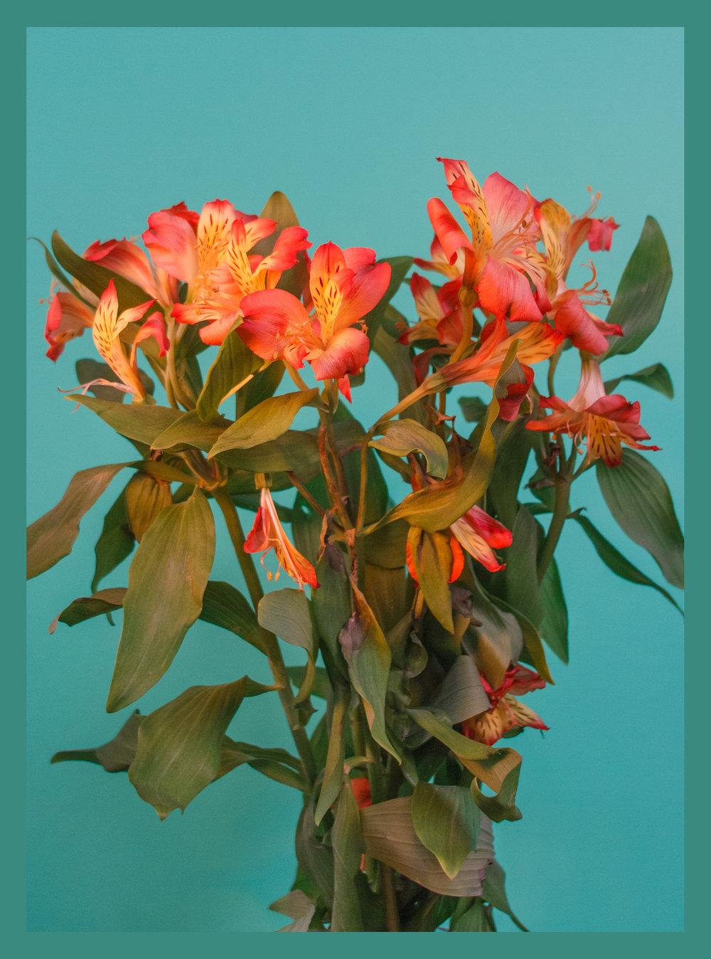 lilacblueborder.jpg