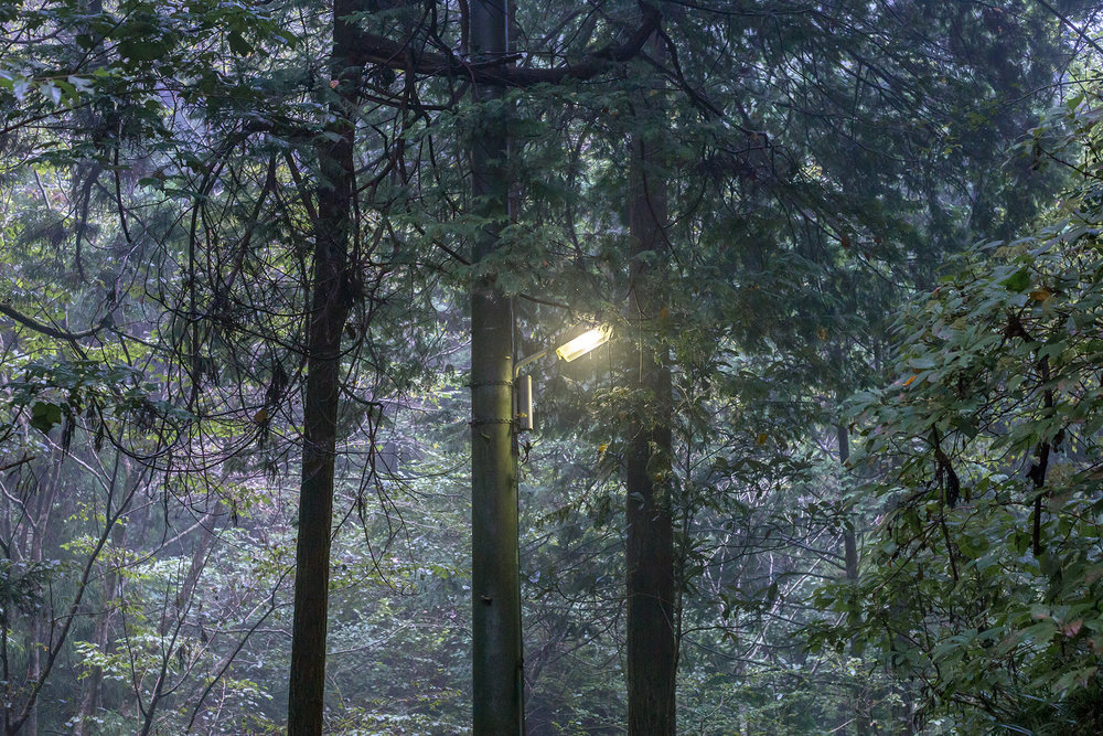 lamp3trees.jpg