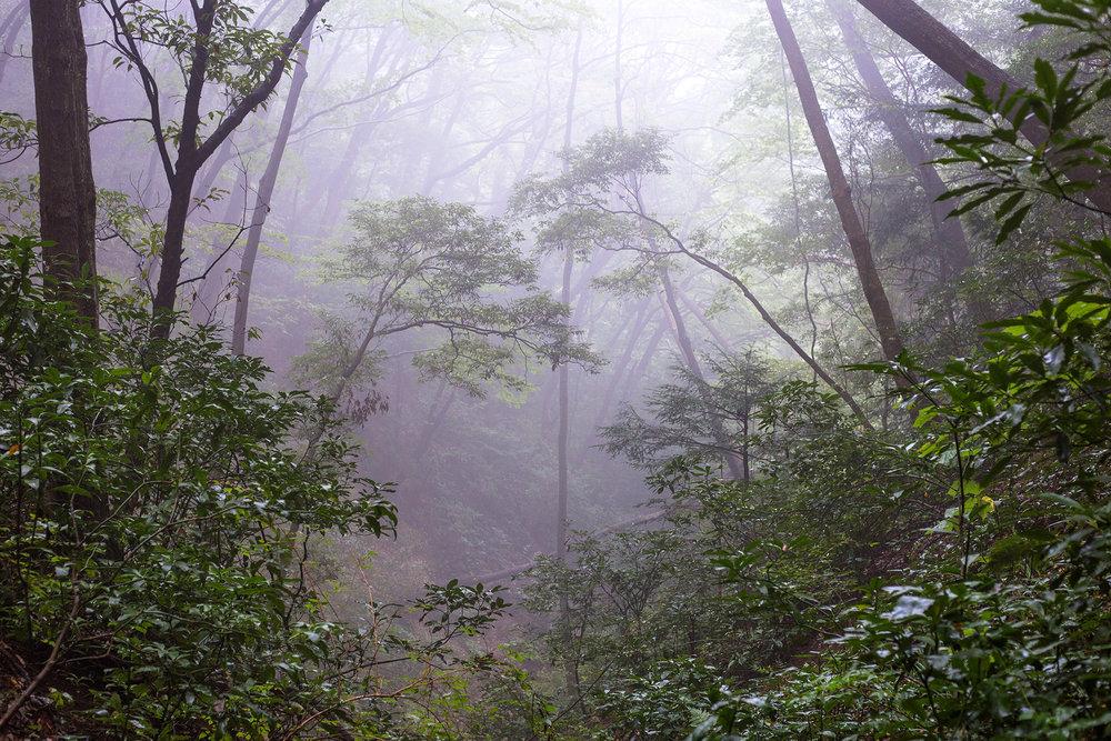 forest2trees.jpg