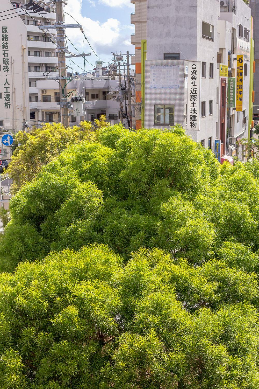 Mika_Okinawa_toptrees-2.jpg