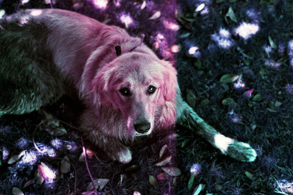 violet_03.jpg