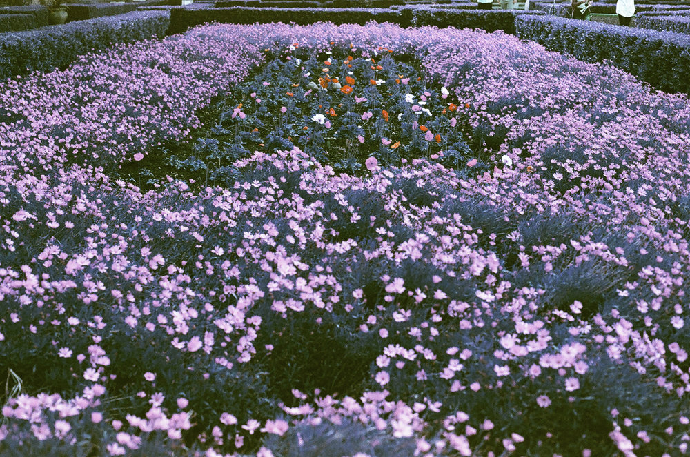 violet_05.jpg