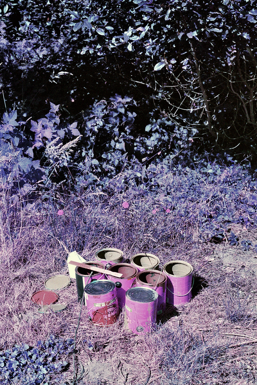 violet_06.jpg