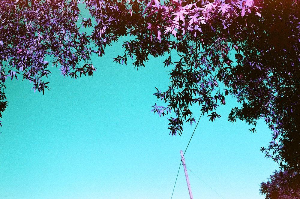 violet_17.jpg