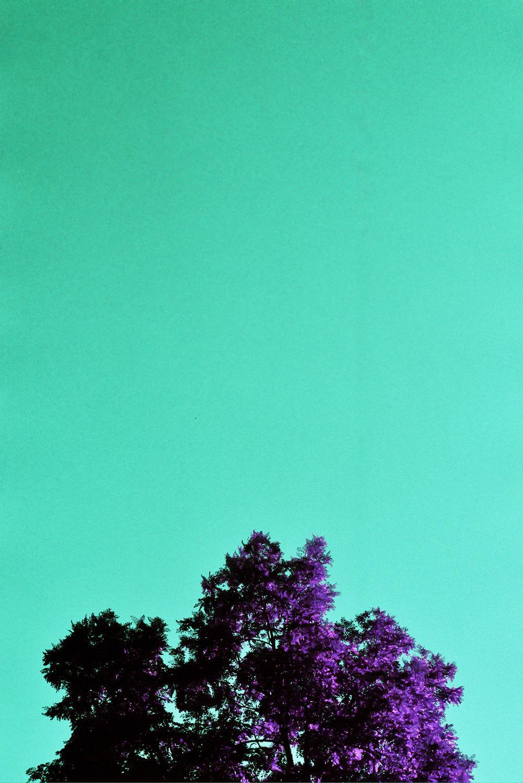 violet_26.jpg