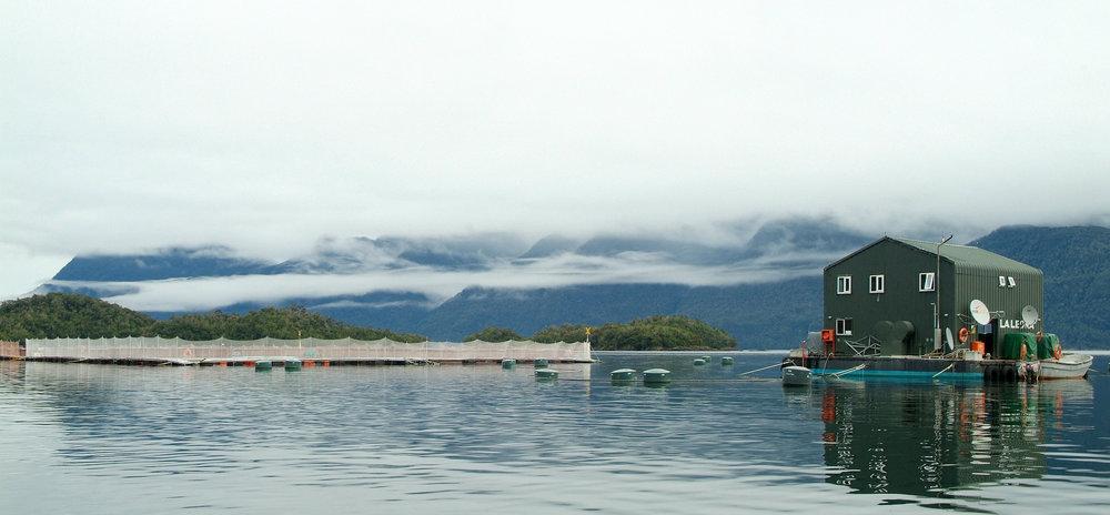 Verlasso Fish Farm Chile