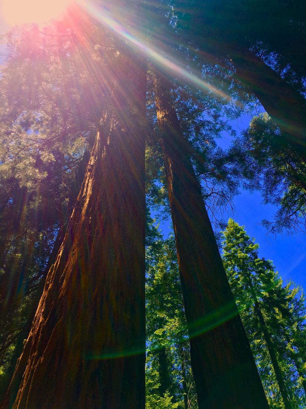Sequoia Yosemite