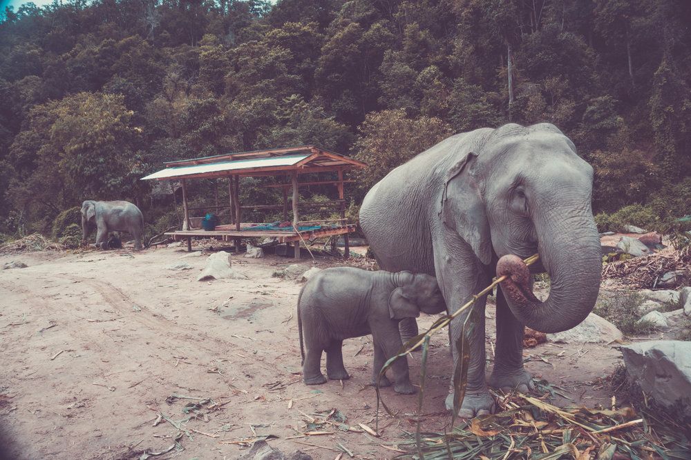 Elephant Jungle Sanctuary 2.jpg