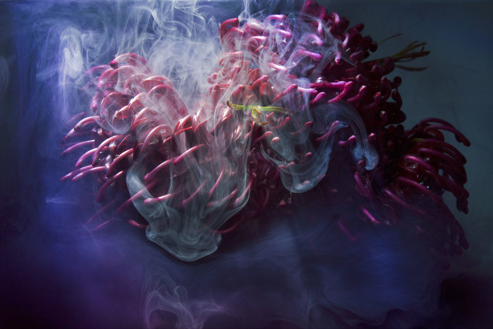 Ellen Portell,  High Flow , 2015, photograph (pigment on fine art paper), 50.8 x 76.2 cm
