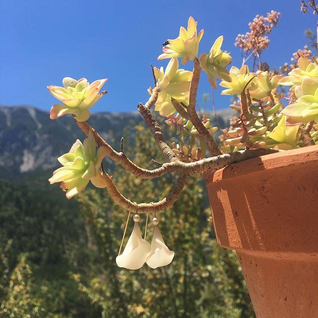 Nous sommes dorées par le soleil du sud. ☀️ #sud #France #Drôme #village #soleil #brantes #artisanal #porcelaine #fleur #petals #blanche #dorée