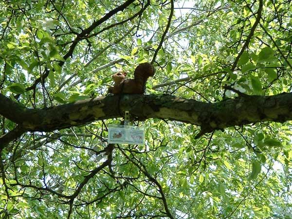 wisconsin squirrel convention8.jpg