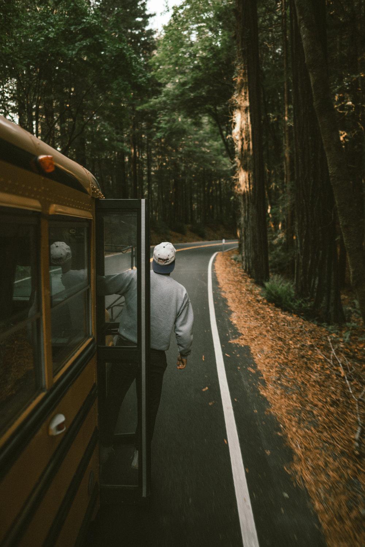 redwoods-1.jpg
