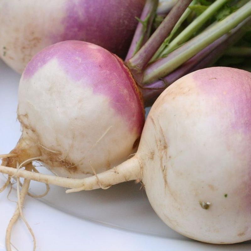 turnip -
