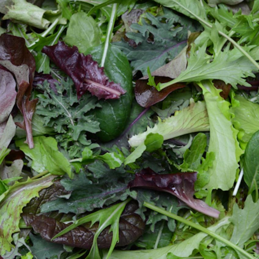 salad mix -