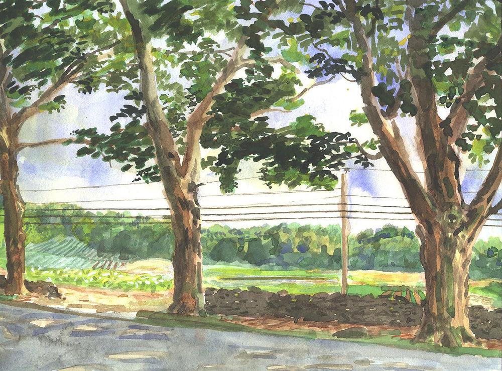 Maple Lanes Farms, 1996 Gouache
