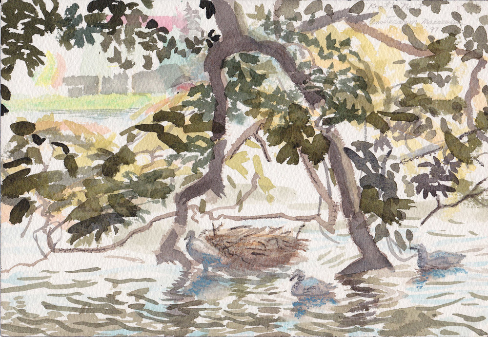 Coot's Nest, 1997 Watercolor