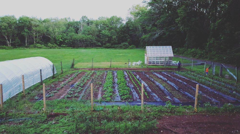 The 'original' Garden. -