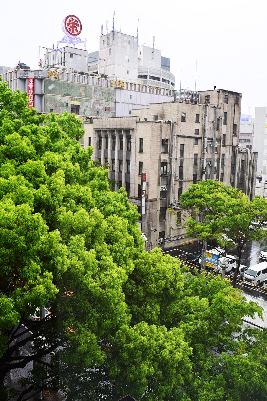 東面からは、隣接する朝日神社の神木を望む。