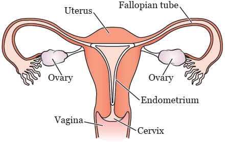 fertility_preservation-fig_1-en.png