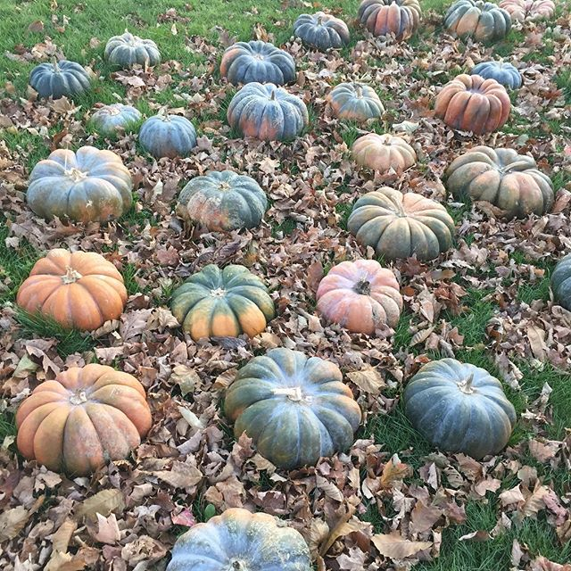 At this time of year, we give thanks to you, Lone Oak Farm believers and supporters, to good friends and a loving family. We are also grateful for the abundance of herbs and nutritious food our farm produced this year. (Pumpkins from @soukupfarms ) #thankful #farmlife #thanksgiving2017🦃🍂🍁 #harlemvalleyfarms #dutchesscounty #hudsonvalleyfood #loneoakfarmny