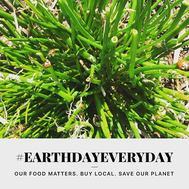 Let's celebrate #earthdayeveryday !!! Our food choices matter: everything we eat has an impact on our health and the health of the planet. The great news is that choosing local and responsibly-grown produce is a powerful way to contribute to a healthier world for all. Thank you for choosing our local produces and helping us celebrate #EarthDayEveryday @loneoakfarmny and all around Dutchess County and the Hudson Valley!