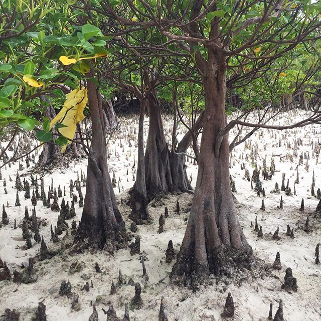 #mangrove #explore #exploring #nature #resort #holiday