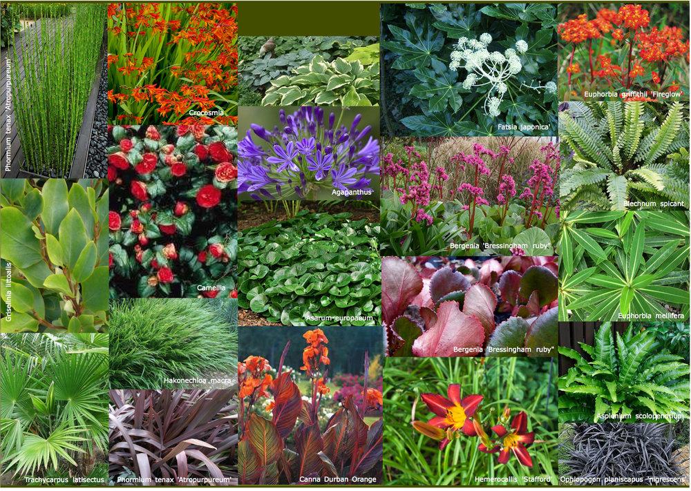 Jeal plants small2.jpg
