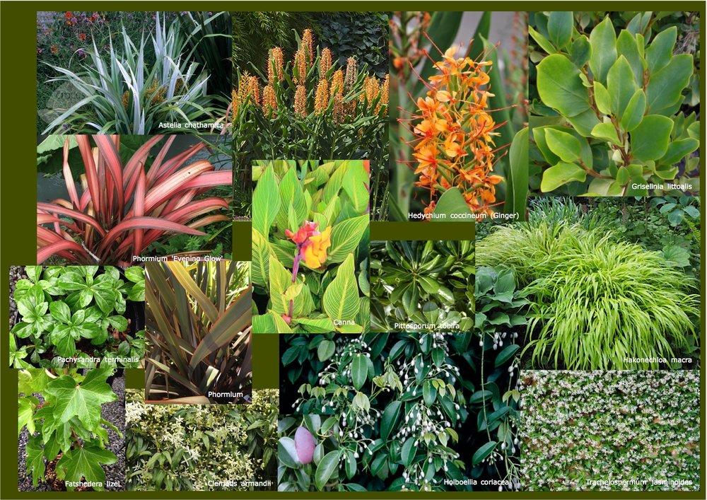 Jeal plants small.jpg