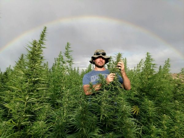 Photo Credit: Boulder Hemp Farm   Shane Davis  Owner of Hemp Spirit Extracts, M222 Genetics, and Boulder Hemp Farm.