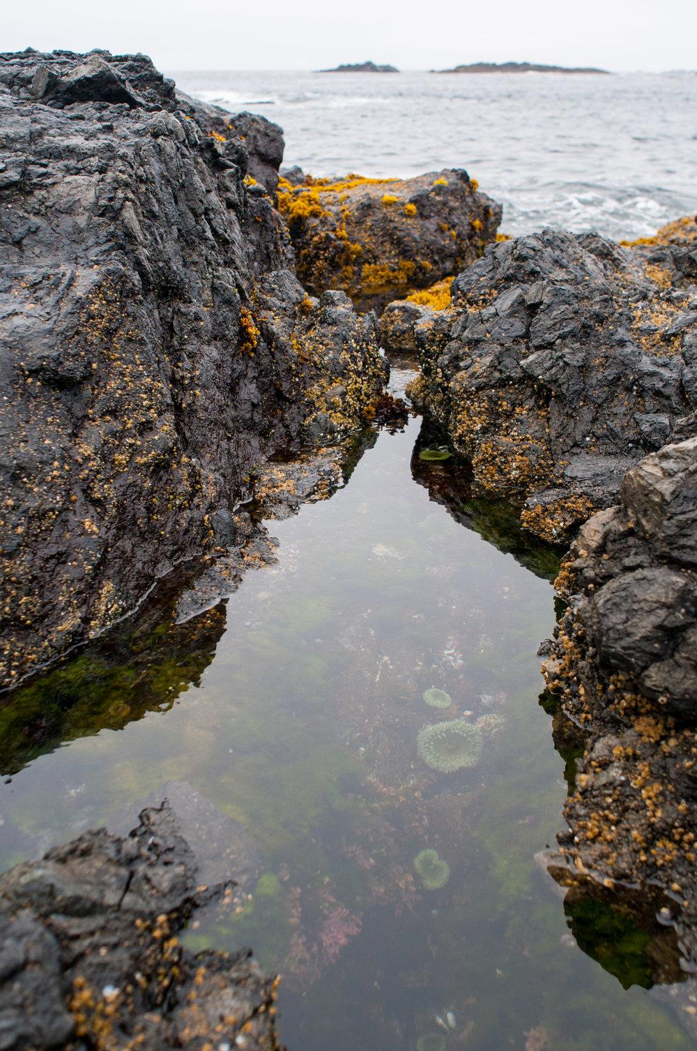 tofino-tide-pool.jpg