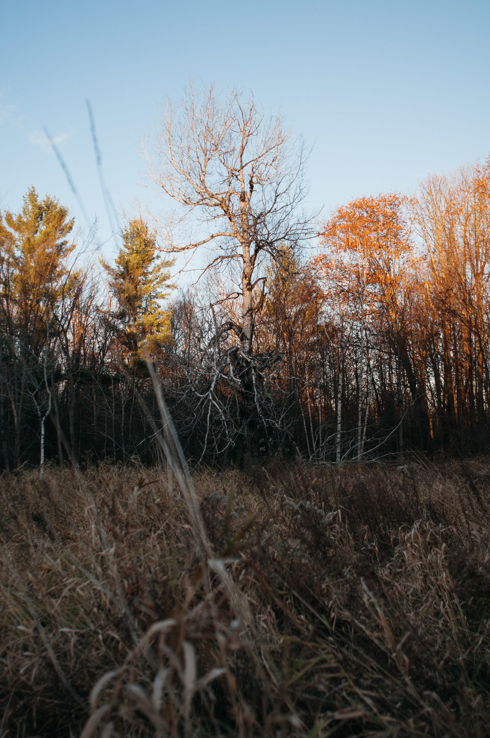 ontario-forest-1.jpg