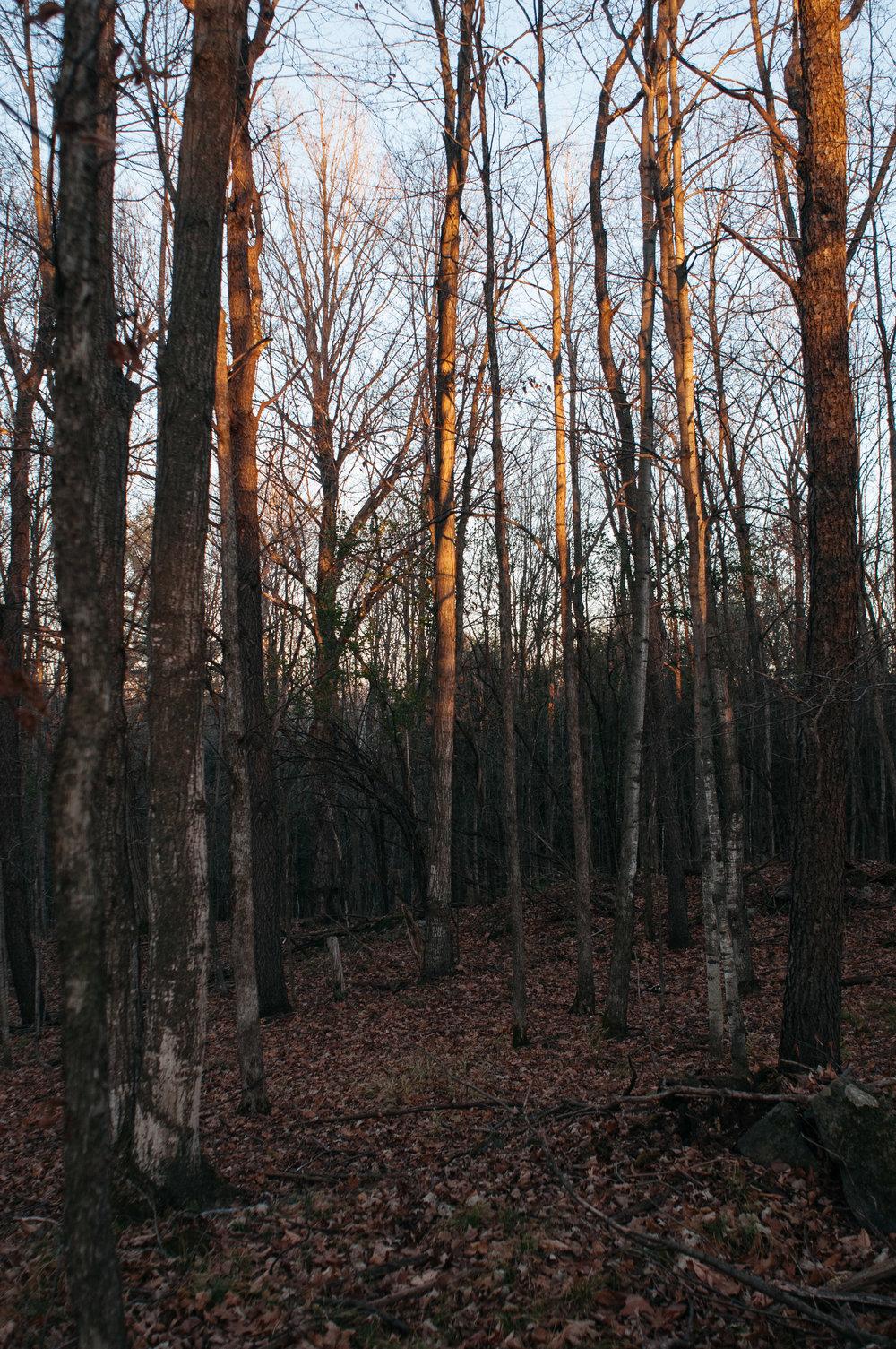 ontario-forest-2.jpg