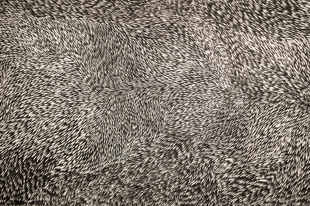 Leaves  by Australian Aboriginal painter Gloria Tamerr Petyarre at the Seattle Art Museum.