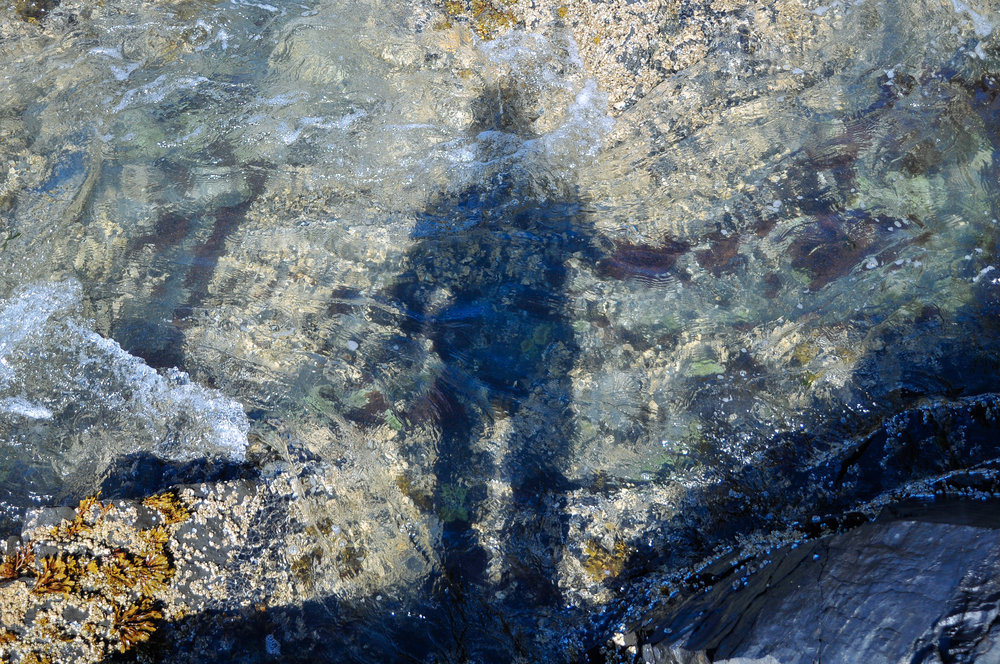 tidepool-reflection.jpg